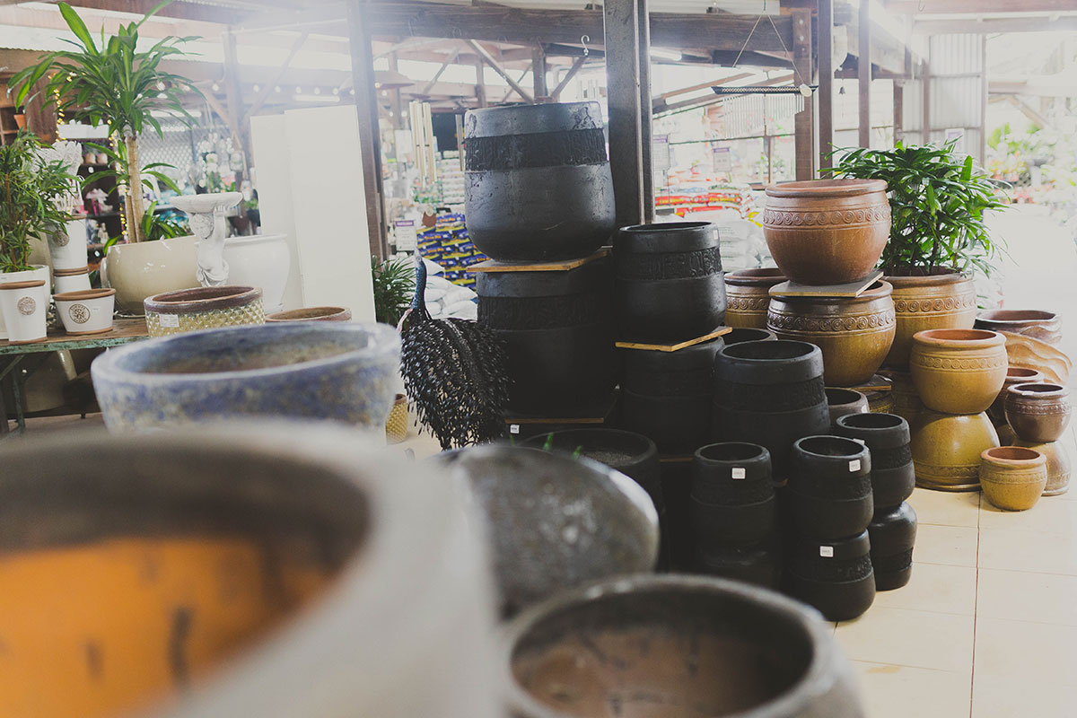 Discovering the Limberlost Pot Shop